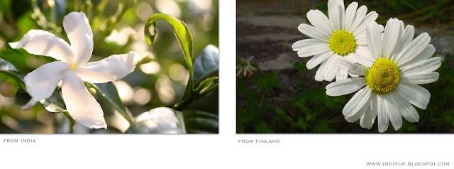 Suomalaisia ja intialaisia kukkia