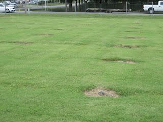 Uf Ifas Irrigator Plot Study Comparing Different