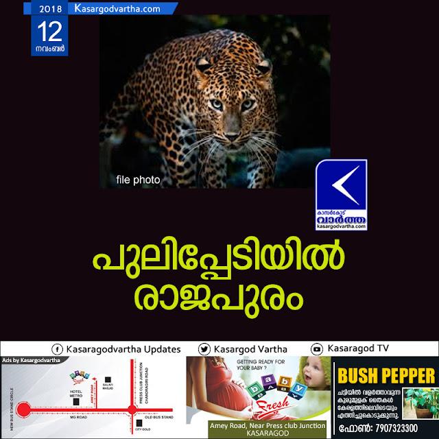 News, Rajapuram, Kerala, Kasaragod, Police-station, Leopard threat in Rajapuram