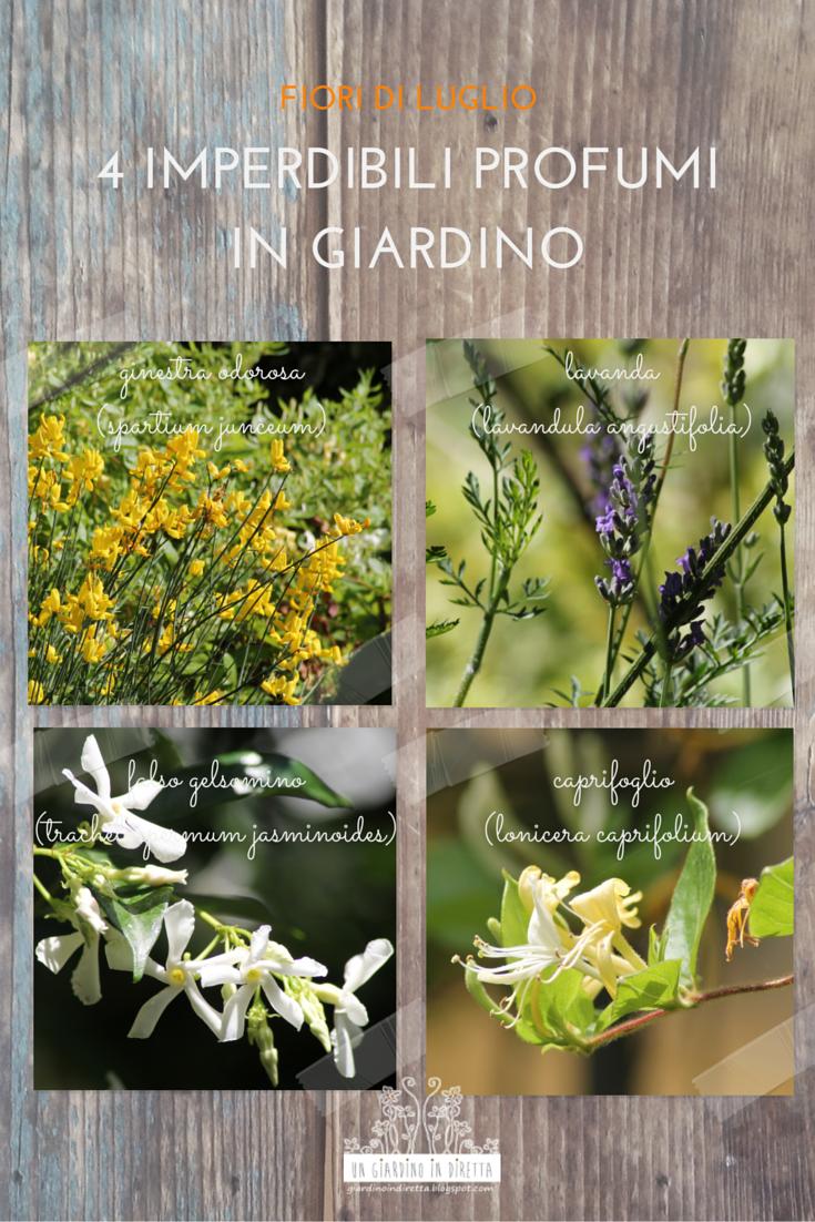Fiori di luglio 4 imperdibili profumi in giardino un for Fiori in giardino