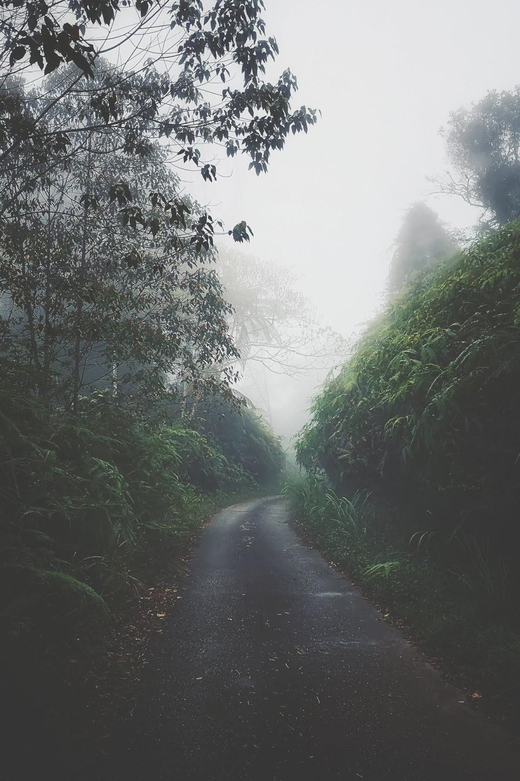 Menuju ke Gunung Telapak Buruk