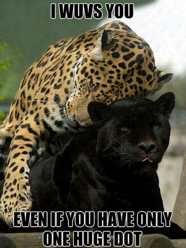 Funny One Dot Cat Leopard Joke Picture
