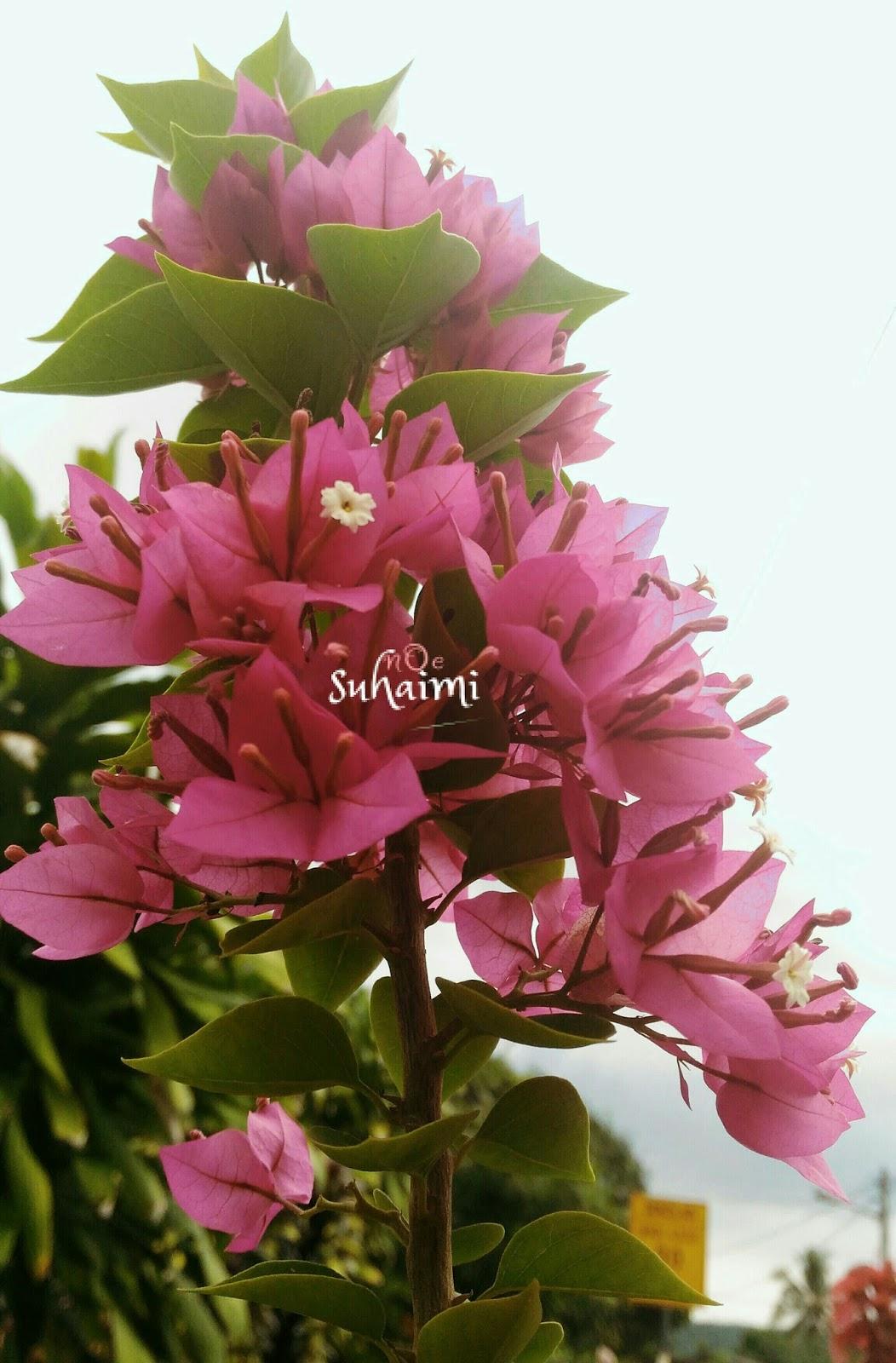Bunga Kertas Pink