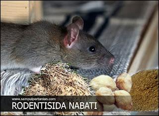 PESTISIDA NABATI Umbi Gadung (Rodentisida alami untuk hama tikus)