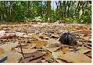 Kepiting Hermit Hewan Peliharaan Omivora Untuk Terarium hutan