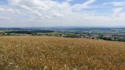 Kornfeld mit Blick auf Solothurn