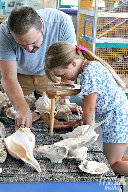 One of my daughter's favorite exhibits at Science Central in Fort Wayne was the Swap Shop. In the Swap Shop, the kids (& adults!) were encouraged to touch & explore various fossils, rocks, minerals, seashells, & even animal bones.