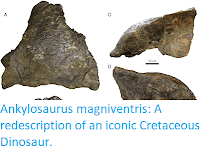http://sciencythoughts.blogspot.co.uk/2017/12/ankylosaurus-magniventris-redescription.html
