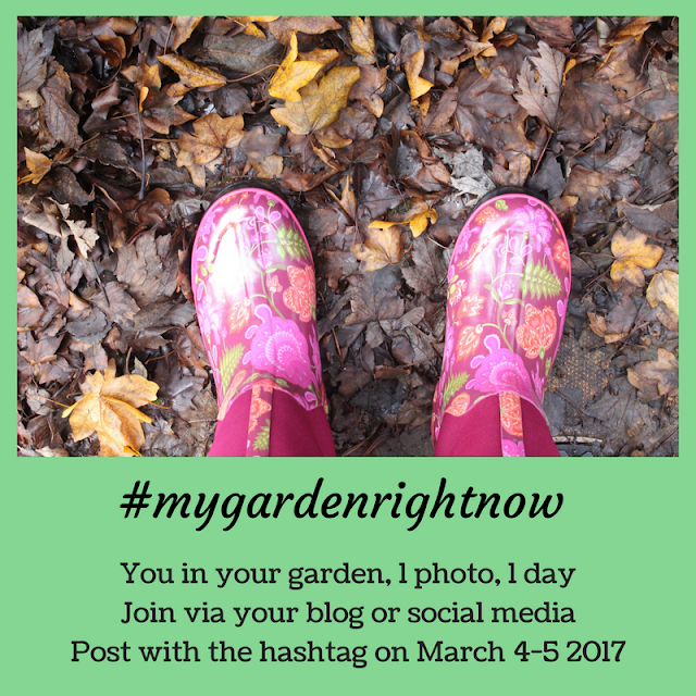 Introducing the #mygardenrightnow project