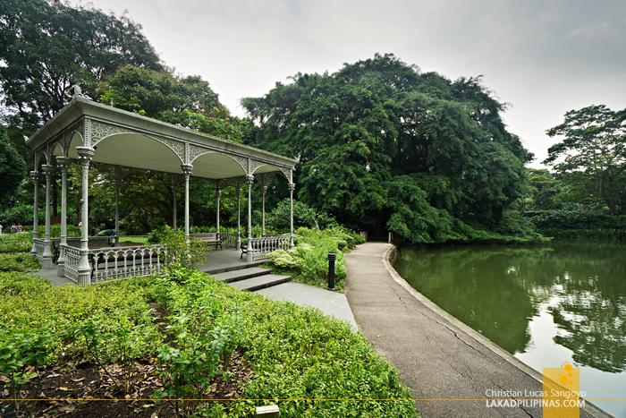 Singapore Botanic Gardens Swan Lake
