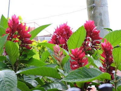 la belleza de la naturaleza flores del jardín