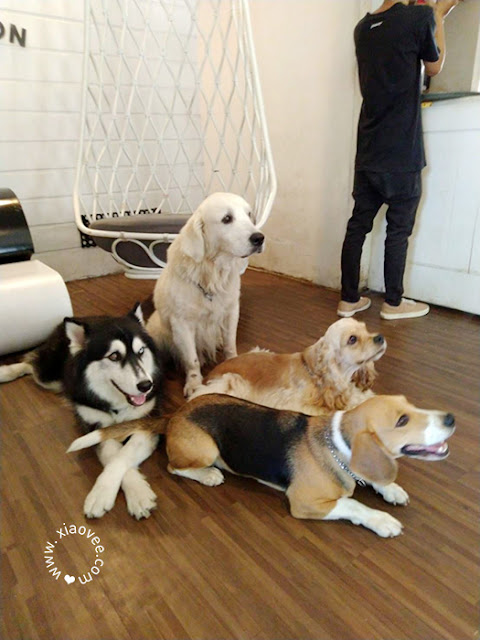 Pawvilion Dog Cafe, Pawvilion Dog Cafe Malang, Pawvilion Malang, Dog Cafe Malang, Dog Cafe Indonesia, Dog Cafe Review, Dog Cafe Indonesia Review