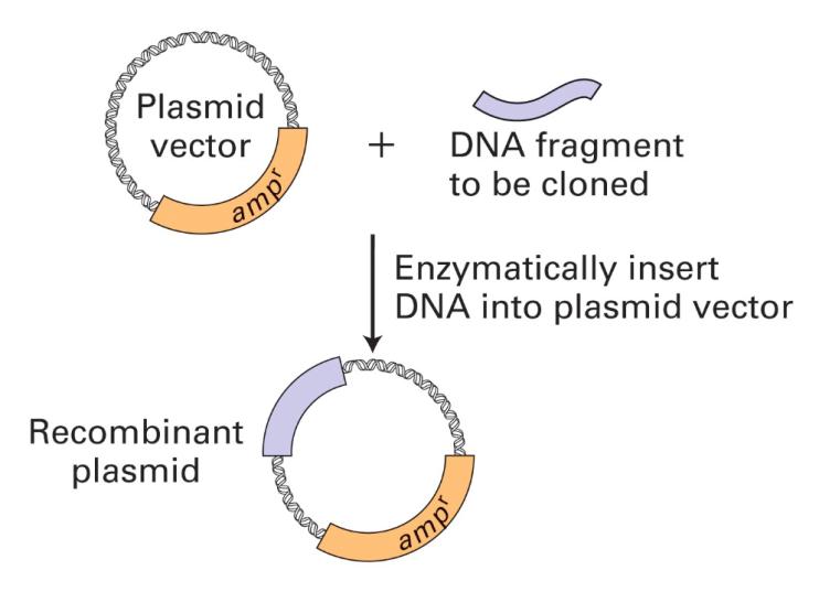 luz eugenia: UNIDAD 10 TÉCNICAS DE LA BIOLOGÍA MOLECULAR