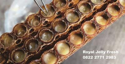 royal jelly, manfaat royal jelly, cara mengonsumsi royal jelly, kkhasiat royal jelly, jual royal jelly jember, royal jelly jember, supplier royal jelly jember, penjual royal jelly jember, toko royal jelly jember, agen royal jelly jember, distributor royal jelly jember, peternak lebah jember, komunitas peternal lebah jember, peternak lebah  madu jember