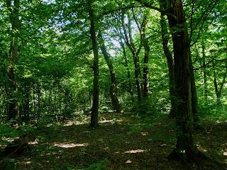 Клевань. Лес возле тоннеля Любви