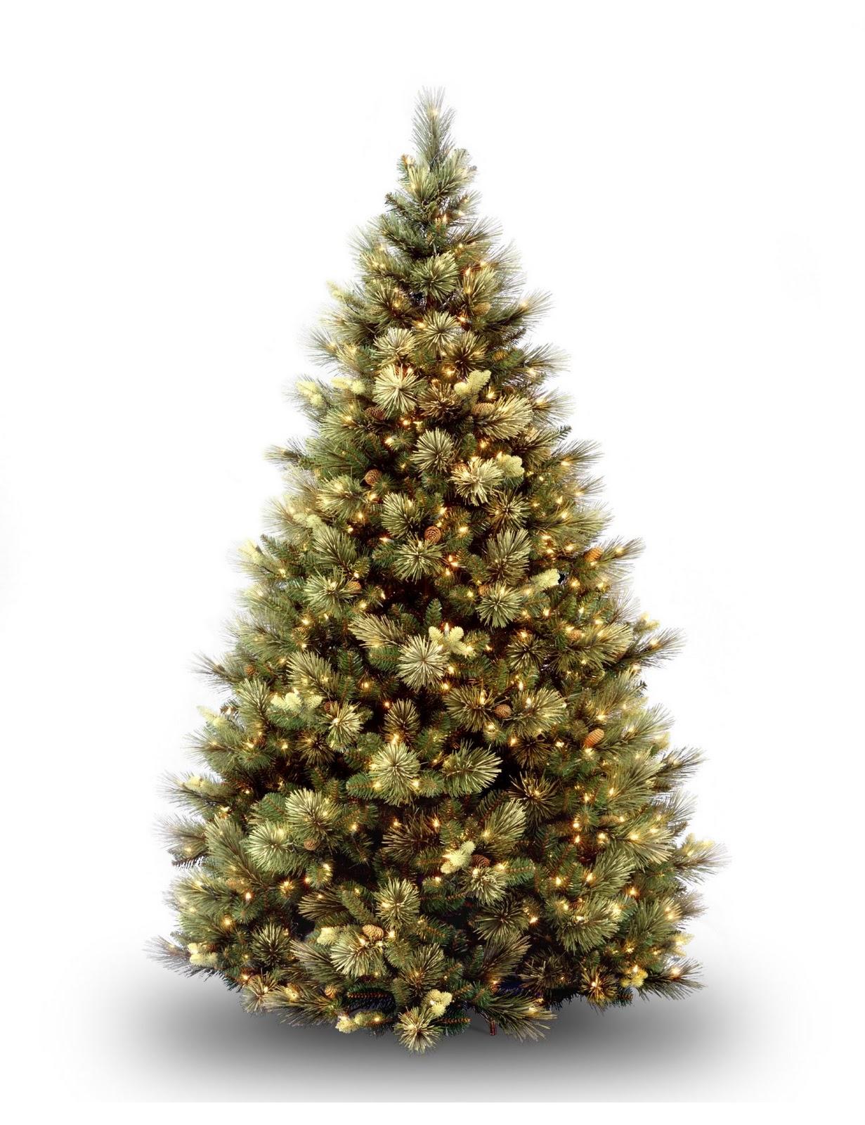 Christmas Tree Carolina Pine