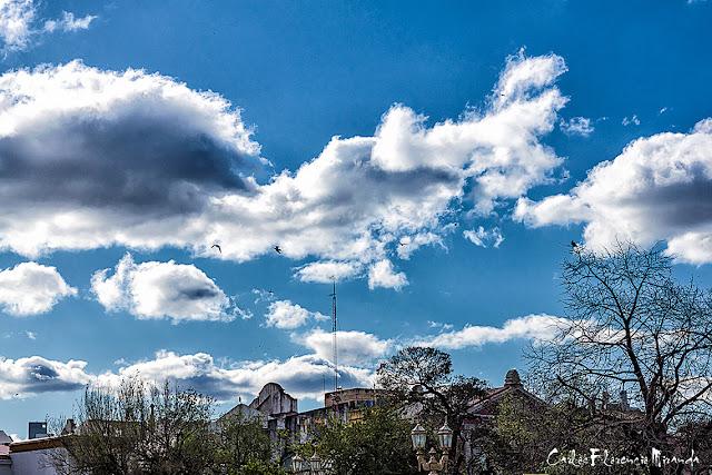 Palomas volando con fondo de cielo con blancas nubes.