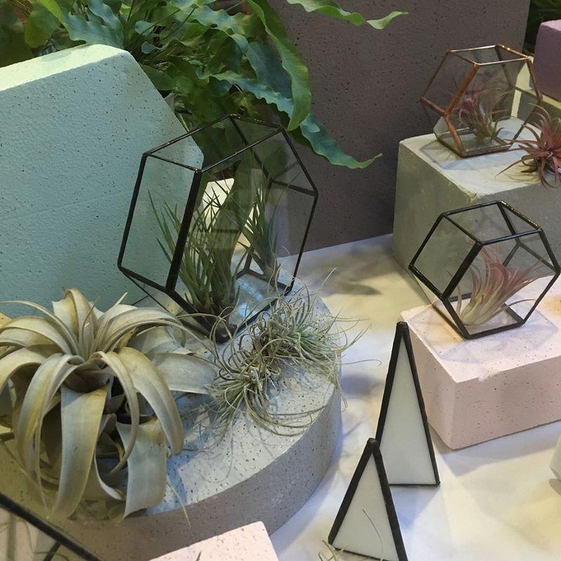 Terrarios con tillandias y plantas del aire