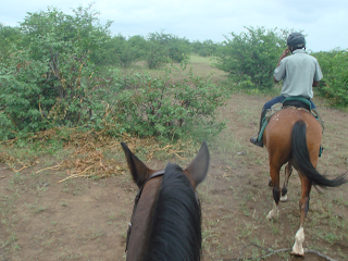 norsut, mashatu, botswana, riitta reissaa