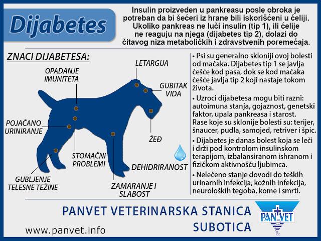 Dijabetes kod pasa Panvet infografika