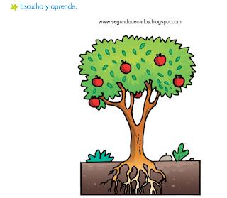 http://www.primerodecarlos.com/SEGUNDO_PRIMARIA/enero/tema1/actividades/CONO/partes_plantas.swf