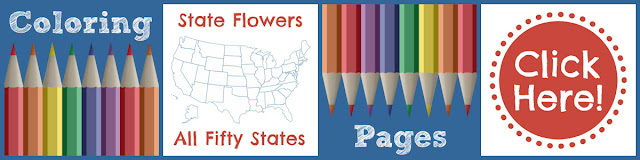 USA State Flowers Quiz