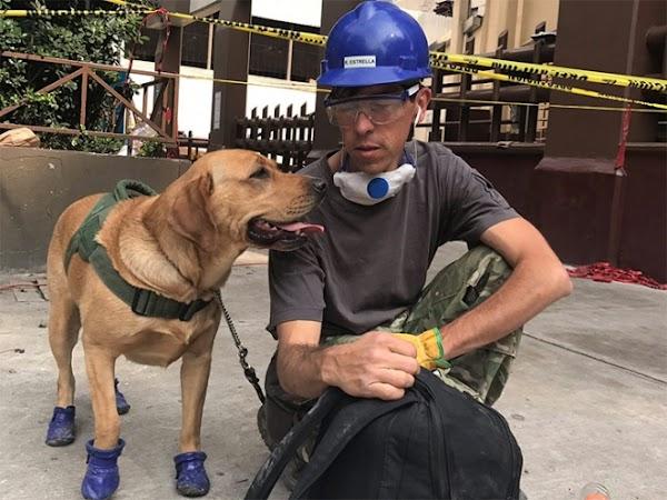 'Yona', la perra que encontró a cuatro personas entre escombros
