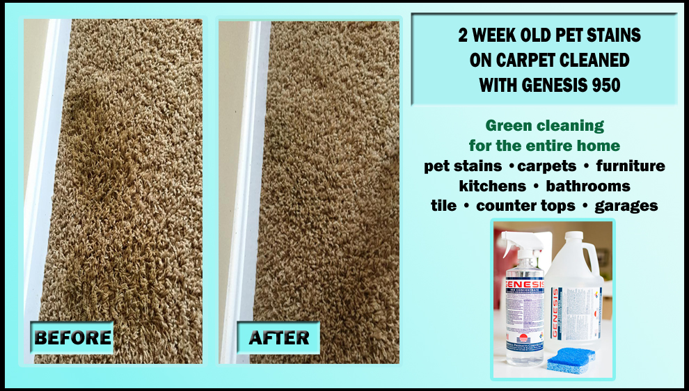 how to remove set in urine stains from carpet