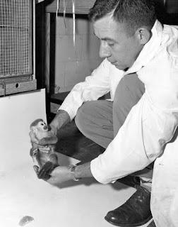 Khỉ Gordo cùng nhà nghiên cứu. Hình ảnh: U.S. Army.
