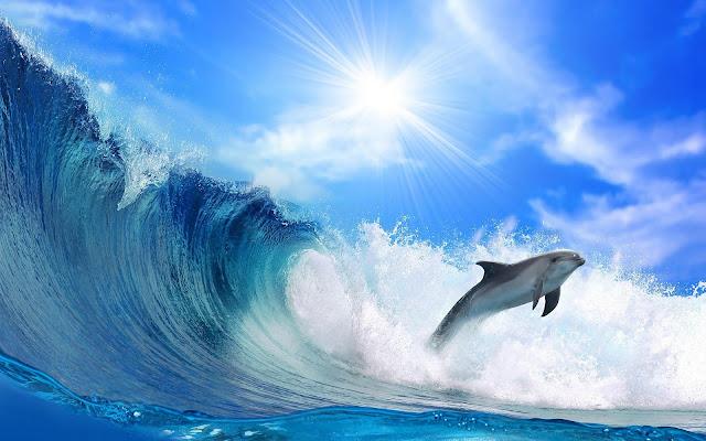 Foto springende dolfijn en hoge golf