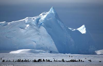 Penguin di Kutub Selatan. Sumber foto: Patrick Woodhead/Dailymail