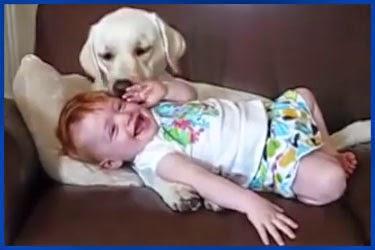 baby hunde spiele