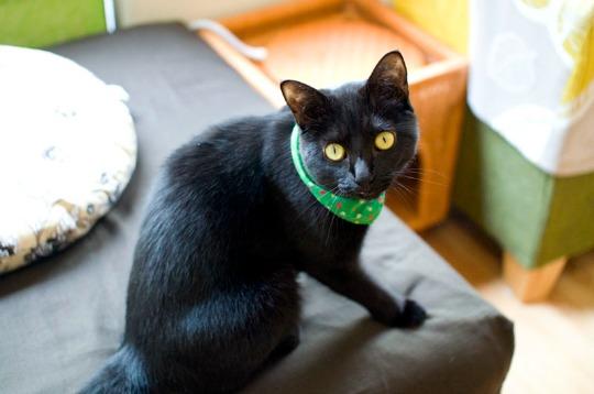 nekobyaka black cats