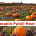 Pumpkin Patch Near Me