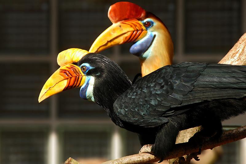 World Bird Sanctuary: Really Weird Birds: Part 8