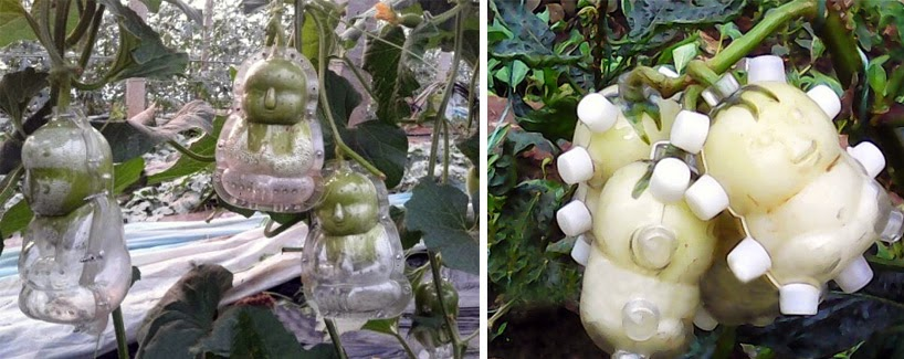 peras en forma de bebes