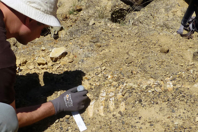 Remains of ancient sea cow discovered on California island