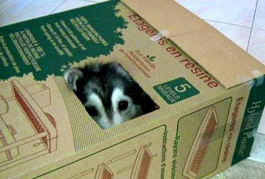 cão na caixa