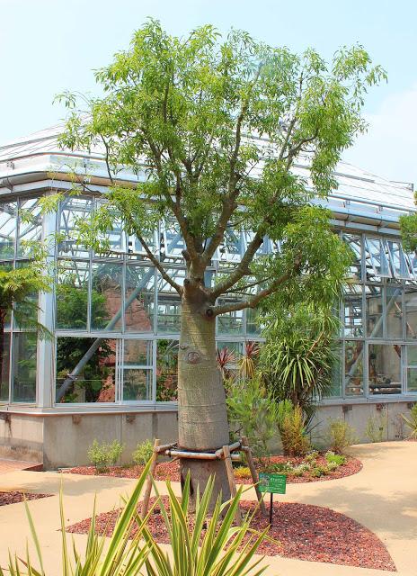山口県、宇部市のときわ公園の植物園がリニューアルしたよ【Y】 プラントハンター西畠清順、世界を旅する植物館  オセアニアゾーン 、ボトルツリー