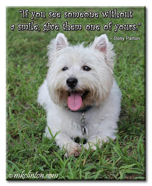 Westie dog smile meme