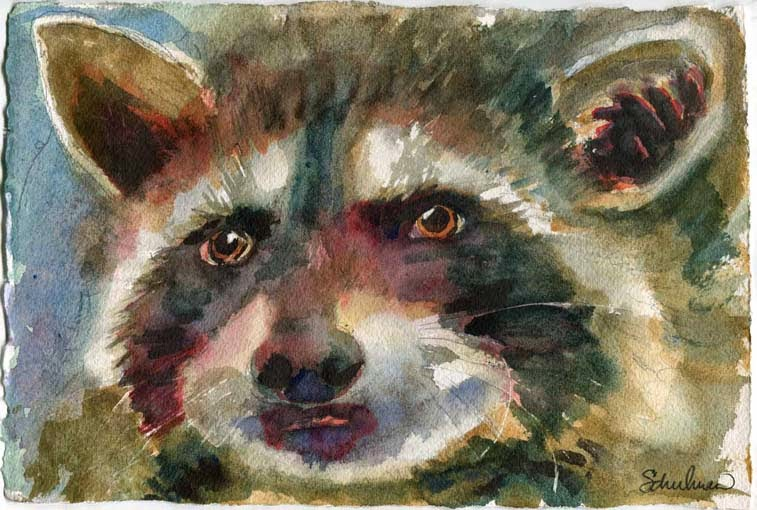 raccoon by miriam schulman https://www.etsy.com/listing/212572104/animal-art-original-watercolor-painting