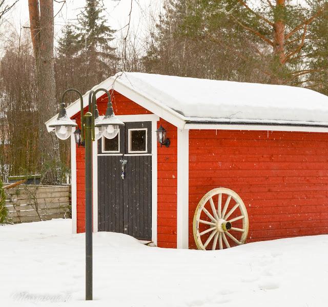 punainen red makrokuva blogi valokuvaus talvi lumi pyry