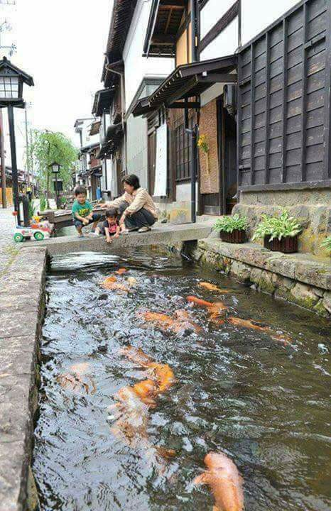 MUST SEE: These Drainage Canals In Japan Are So Clean That Koi Fish Can Live In Them!