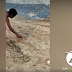 VÍDEO: NÃO BRINQUE COM COBRAS ELAS SÃO VENENOSA