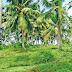 Coconet  like srilanka and India