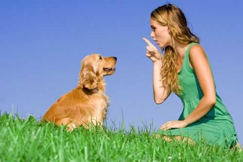 O adestramento de cães pode parecer desnecessário, pode ser considerado como uma frescura, coisa de rico e tal, mas não.  É melhor adestrar, de que ter um cão mal-educado ou antissocial, que causa aborrecimento e prejuízos.