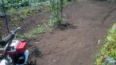 耕うん始まり。残すところは自然薯。