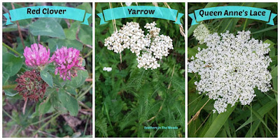 Red Cloer, Yarro, Queen Anne's Lace