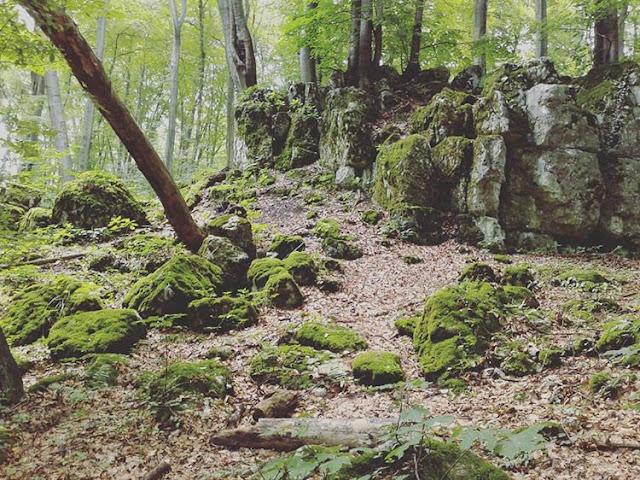 Dzikie miejsca: Rezerwat Panieńskie Skały w Krakowie