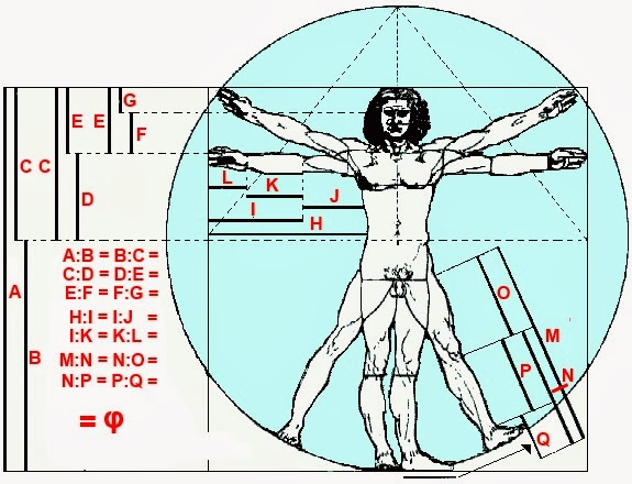 The golden ratio in human proportions